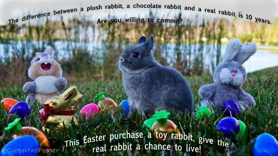 EasterCampaign